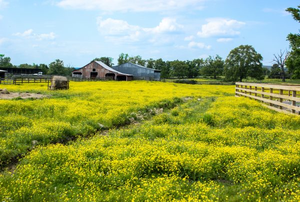Farmland with barn and wildflowers near the Homestead Resort in Midway